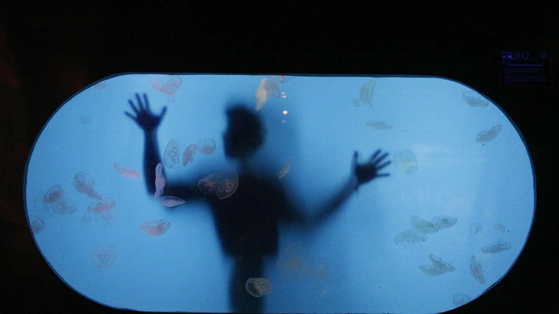 Ein Meeresbiologe im Melbourne Aquarium (2008)