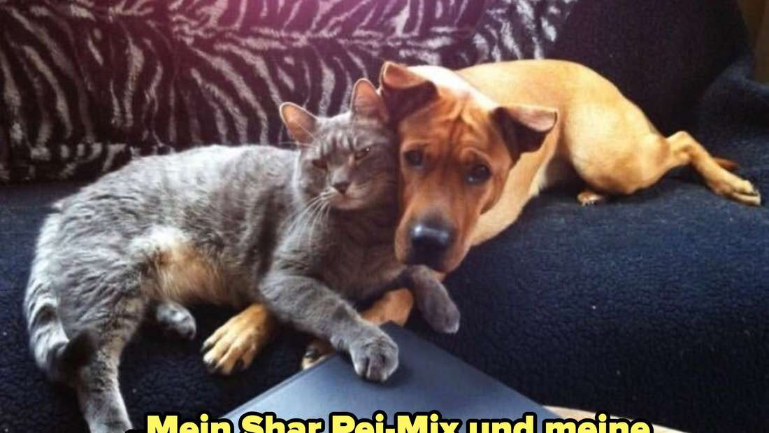 A cat and dog putting their heads together and looking directly at the camera