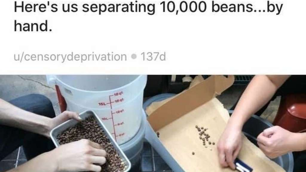 two people sorting coffee beans with the caption i just absent-midnely poured unroasted beans into a batch of roasted ones here's us separating 10000 beans by hand