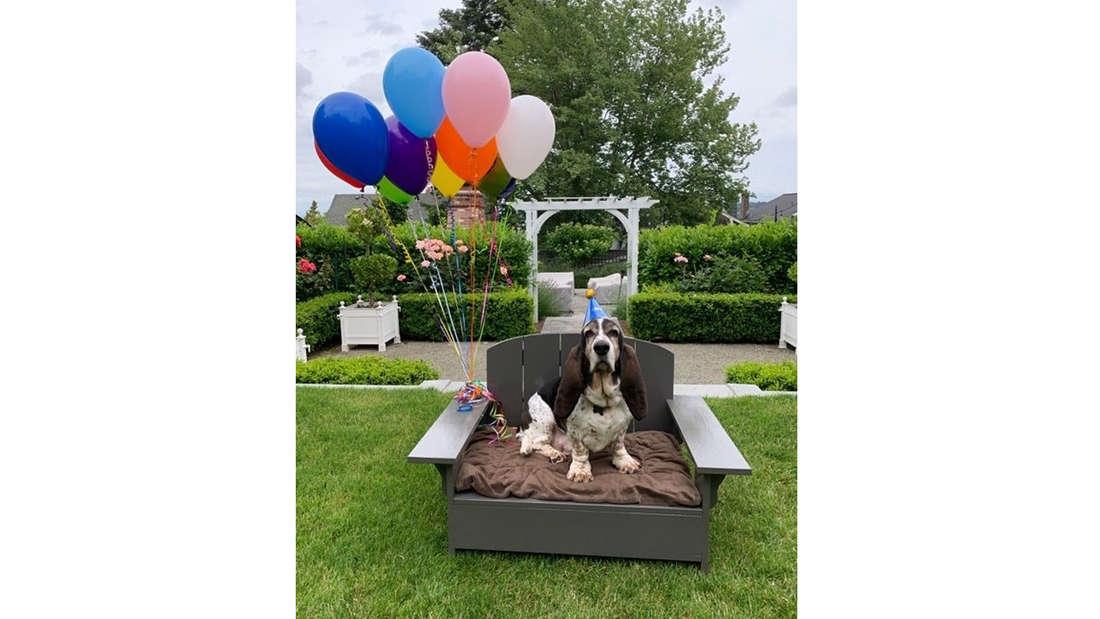 Ein Hund, der in einem Adirondack-Sessel sitzt, an dem Balloons hängen. Er trägt einen Geburtstagshut