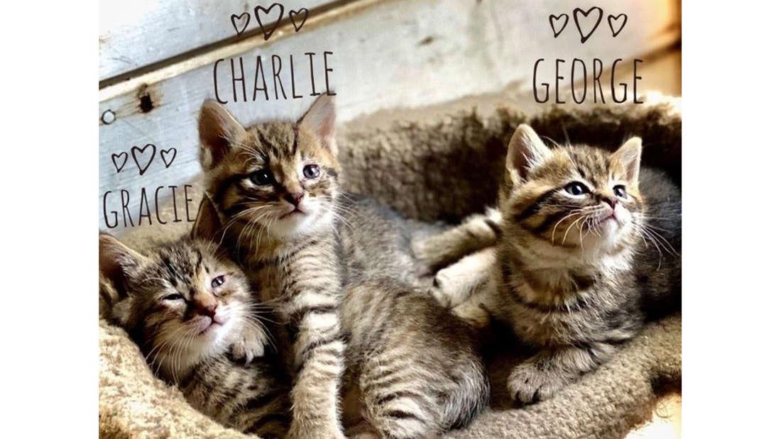 Drei Katzen in einem braunen Körbchen