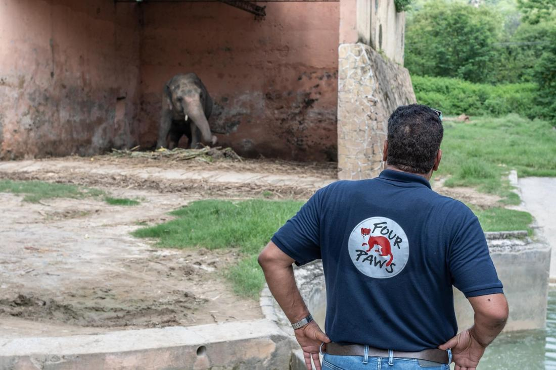 Image of Kaavan the elephant at Marghazar Zoo in Islamabad, Pakistan with his veterinarian Dr. Amir Khalil.