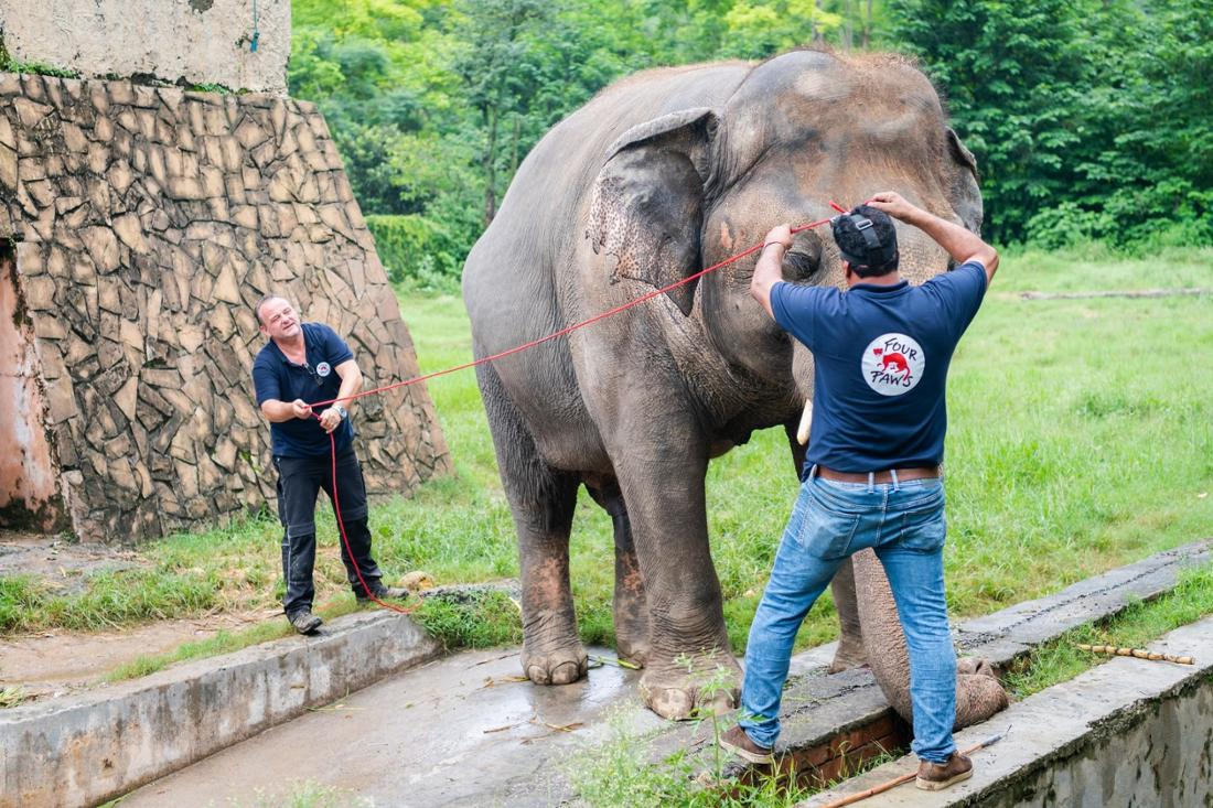 Image of Kaavan the elephant at Marghazar Zoo in Islamabad, Pakistan with his veterinarian Dr. Amir Khalil and FOUR PAWS assistant.