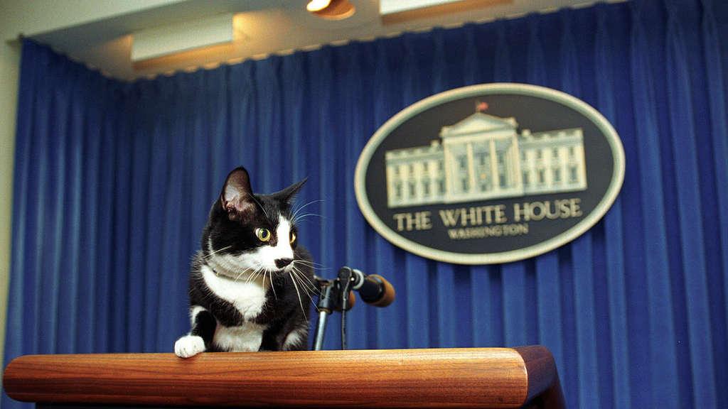 Katze Socks sitzt auf dem Podium im Presseraum des Weißen Hauses.