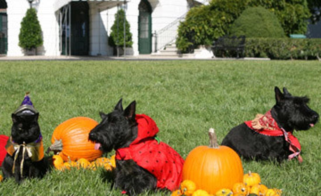 Die Hunde Barney, Miss Beazley und Katze India sitzen verkleidet als Cowboy, Erdbeere und Zauberer auf dem Rasen des Weißen Hauses.