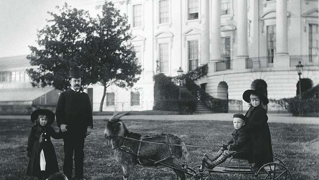 Ein Schwarz-Weiß-Foto der Ziege His Whiskers zusammen mit der Familie von Präsident Harrison.