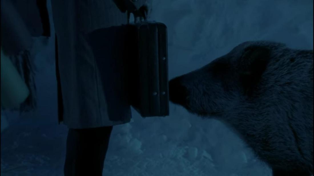 Im Film schnüffelt ein Wildschwein am Koffer von Tilmann.