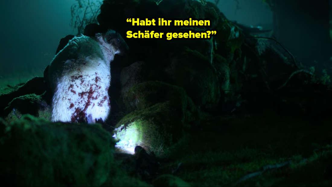 """Ein mit Blut bespritztes Schaf steht im Wald. Neben ihm steht: """"Habt ihr meinen Schäfer gesehen?"""""""