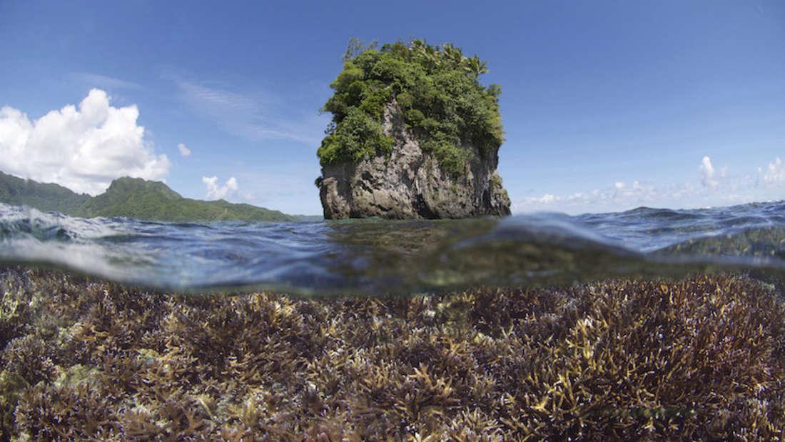Ein Korallenriff in Amerikanisch-Samoa