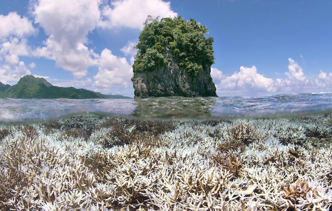 Korallenbleiche in Amerikanisch-Samoa