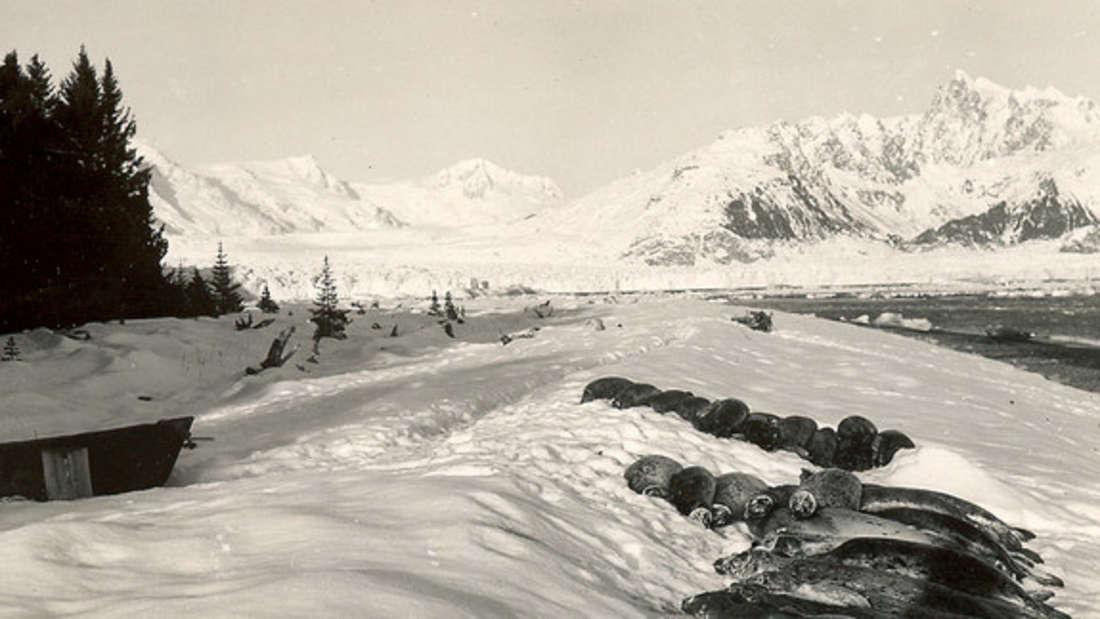Harris Bay, Kenai Fjords National Park, 1920-40