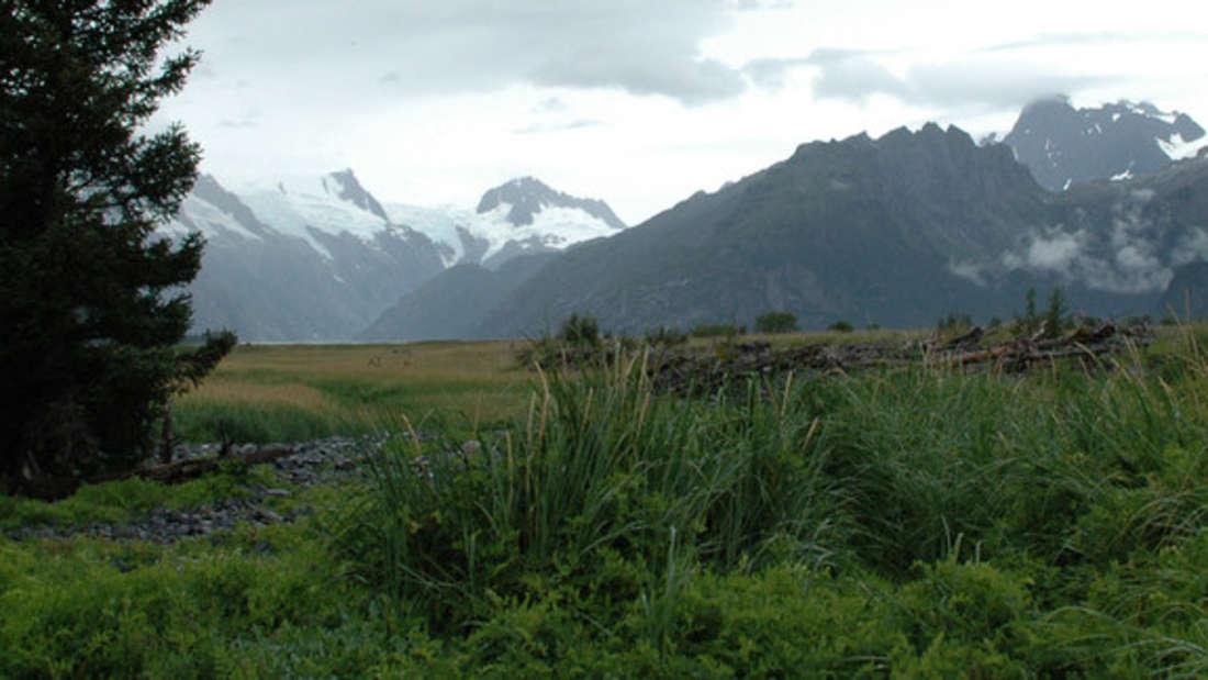 Das Eis des Northwestern Gletschers hat sich zurückgezogen – nun erstreckt sich hier eine Wiesenlandschaft.