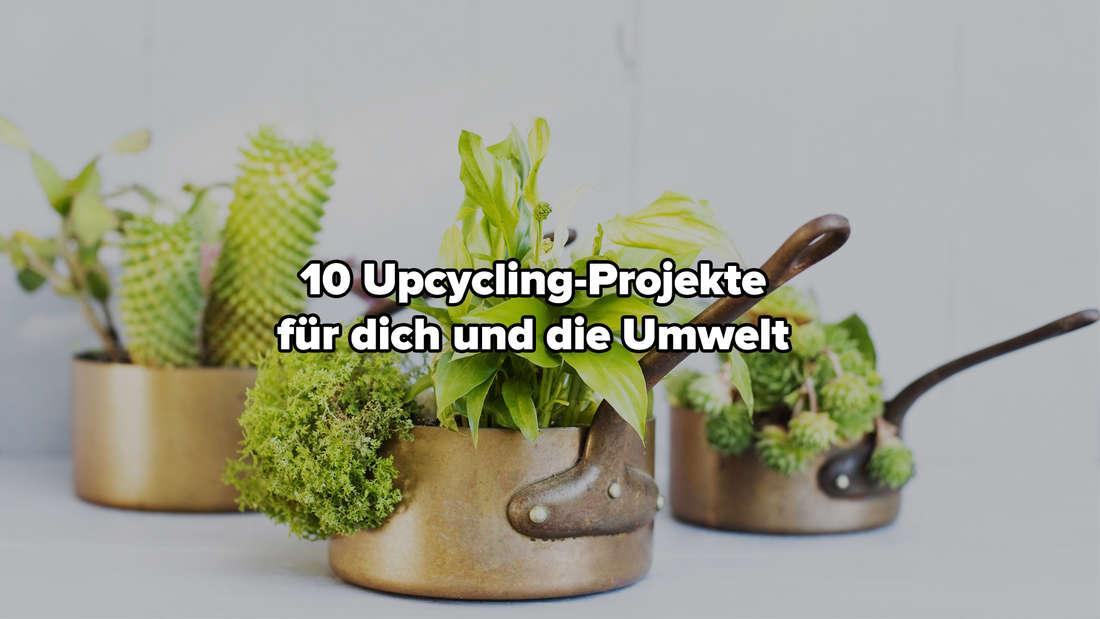 """Drei Töpfe, die in einem Upcycling-Projekt zu Blumentöpfen umfunktioniert wurden. In ihnen wachsen verschiedene Pflanzen. Auf dem Bild steht """"10 Upcycling-Projekte für dich und die Umwelt."""