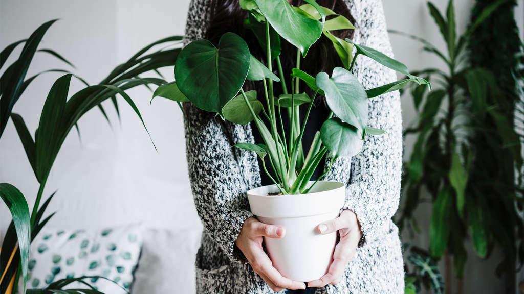 Eine Person, die eine Topfpflanze hält. Neben ihr stehen weitere Topfpflanzen.