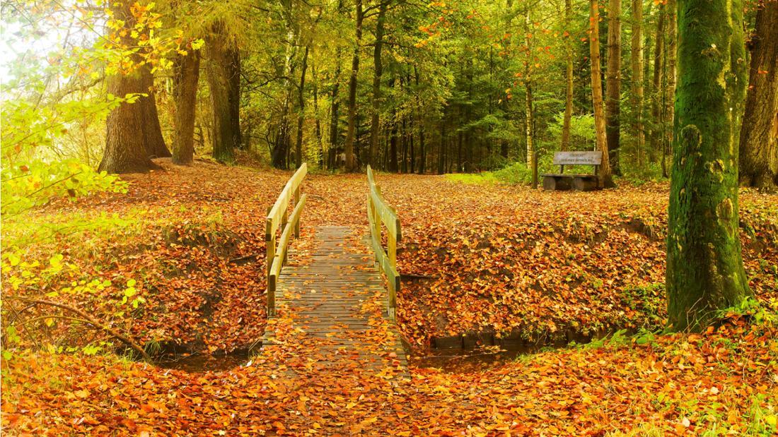 Der Stikelkamper Wald in Leer, Ostfriesland. Es ist eine herbstliche Gegend mit einer Brücke zu sehen, die über einen Fluss führt. Überall liegen orange, rote und gelbe Blätter. Es sind außerdem Bäume und eine Bank zu sehen.