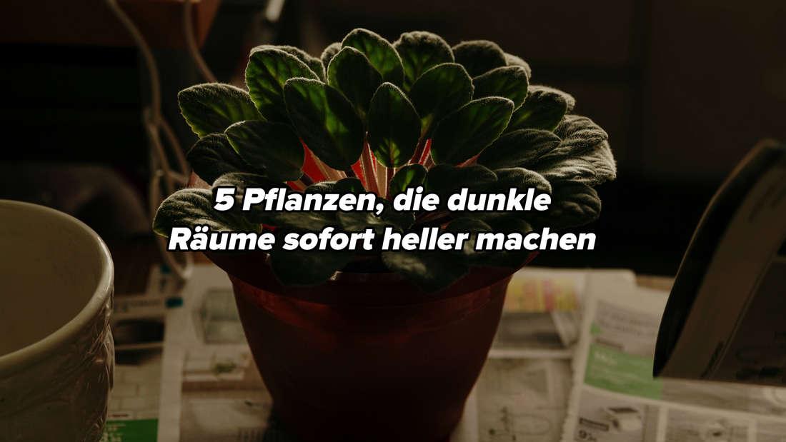 """Eine grüne Pflanze in einem Topf, die in einem dunklen Raum auf Zeitungen steht. Auf dem Bild steht """"5 Pflanzen, die dunkle Räume sofort heller machen""""."""