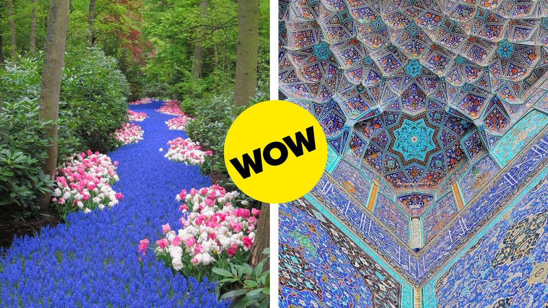 Blaue Blüten, die inmitten von anderen Blumen wachsen und aussehen, wie ein Fluss und eine Decke, die in vielen, schönen Farben gestaltet ist und Muster bildet.