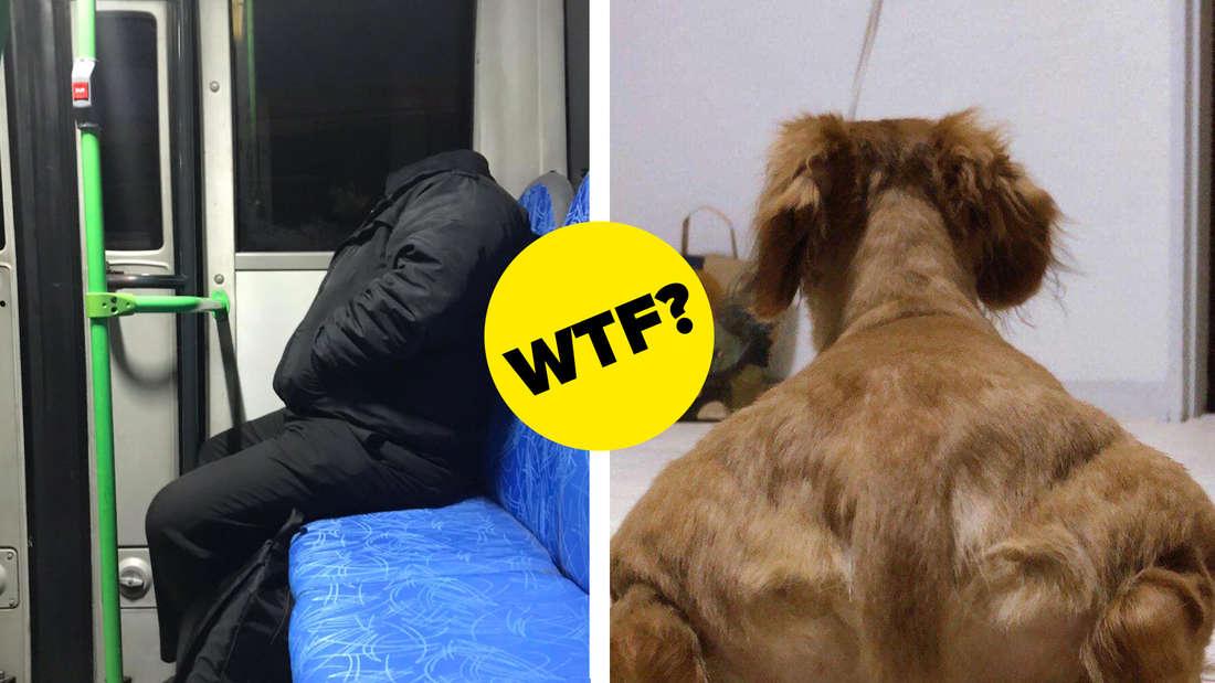Ein Mann, der im Zug sitzt und eine Kapuze trägt und deswegen so aussieht, als hätte er keinen Kopf und ein Hund von hinten, der dadurch aussieht, als hätte er Muskeln.