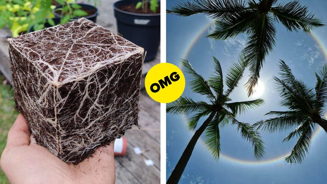 Ein perfekt quadratischer Erdwürfel, der durch Wurzeln zusammengehalten wird und ein Halo um die Sonne unter Palmen.