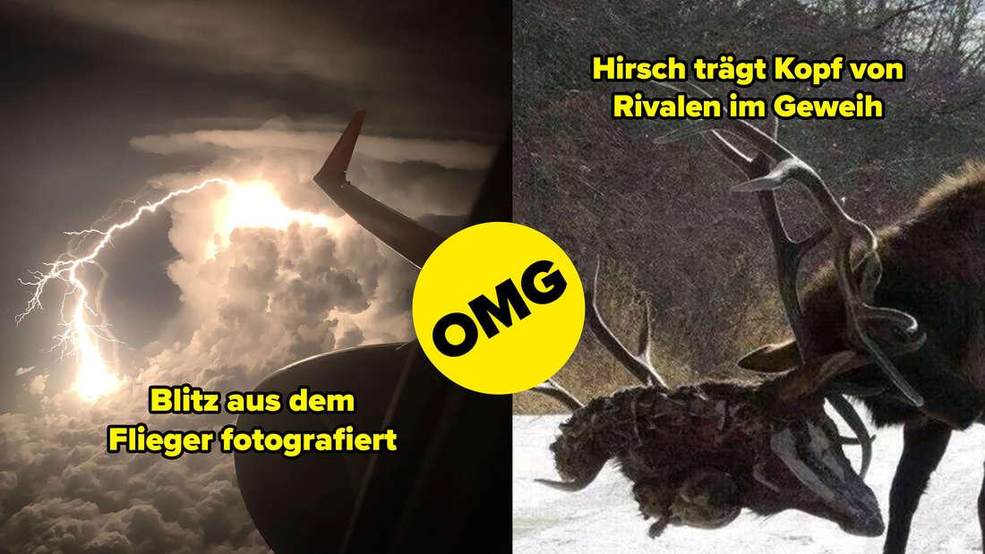 Ein Blitz aus dem Flieger heraus fotografiert, ein Hirsch, der den Kopf eines anderen Hirschen im Geweih trägt