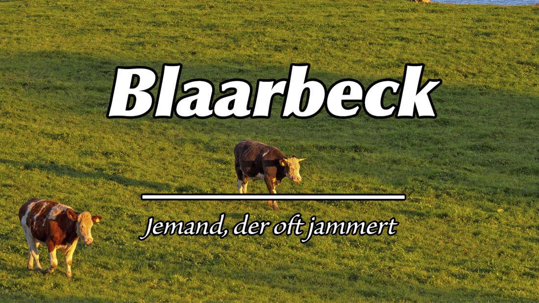 """Zwei Kälber auf einer Wiese in Schleswig-Holstein. Auf dem Bild steht """"Blaarbeck"""". Als Erklärung steht """"Jemand, der oft jammert."""""""