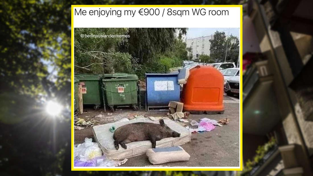 Meme: me enjoying my 900 € / 8 qm WG-room, darunter ein Wildschwein, das im Freien auf einer alten Matraze schläft ... vor ein paar Müllcontainern