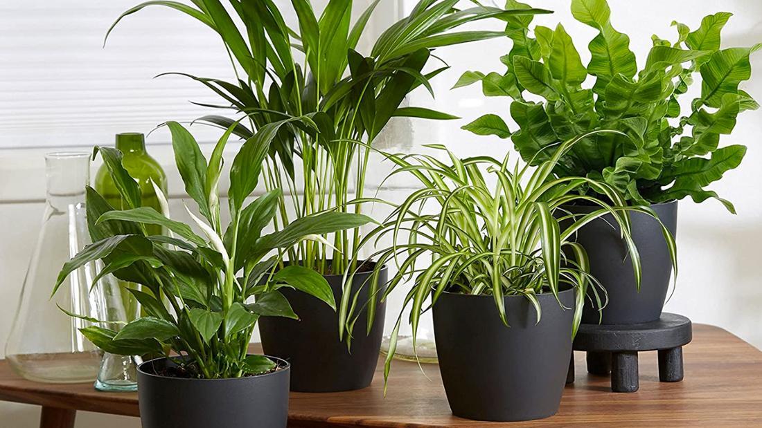 Vier unterschiedliche grüne Zimmerpflanzen mit dunkelgrauen Übertöpfen